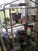 There's a Greenhouse in my Garage!