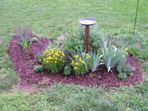My Bird Bath Garden on June 1st