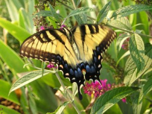 Butterflies and Other Winged Wonders in the Garden