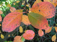 Garden Blogger Fall Color Project: An English Fall and a Japanese Painting