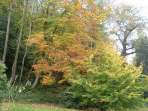 Garden Blogger Fall Color Project: Surrounded by Fall in the Malverns
