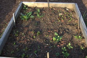 The Spinach and Lettuce Bed