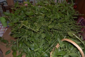Bunches of Basil