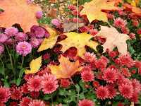 Fall Color Project: Fall from the Write Gardener