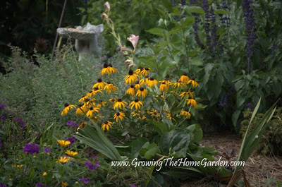 Perennial Rock Garden Ideas Rockery Plants Garden Ice Rink moreover Yard And Vegetable Garden From The Back Porch 5 2010 1 as well New Vegetable Garden Layout furthermore Rooting Arrowwood Viburnum Viburnum also Fall Color 11 2008 12. on designing a vegetable garden with raised beds