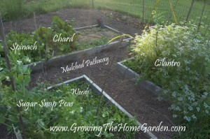 Things to Do in the Vegetable Garden (End of May)