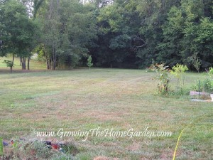 Backyard: August to August