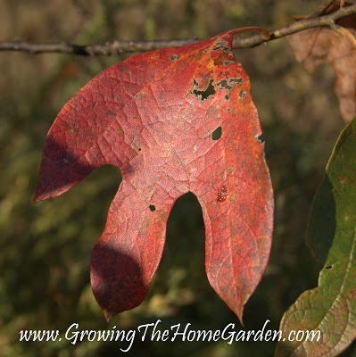 Symbols of Fall in the Garden