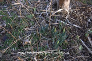 The Birdbath Garden in February – What a Mess!