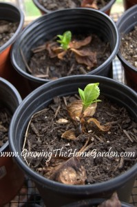 Garden Shed Plant Propagation Update