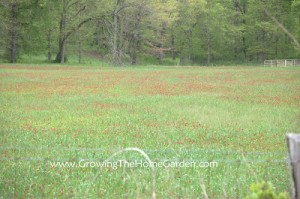 The Beauty of a Cover Crop