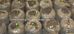 Planting Sage, Basil, and Pepper Seeds (Seed Sowing Saturday)