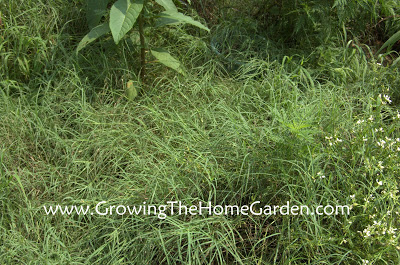 Weekend Garden Chore: The Vegetable Garden