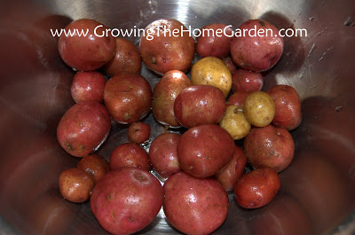Small Potatoes – YUM!