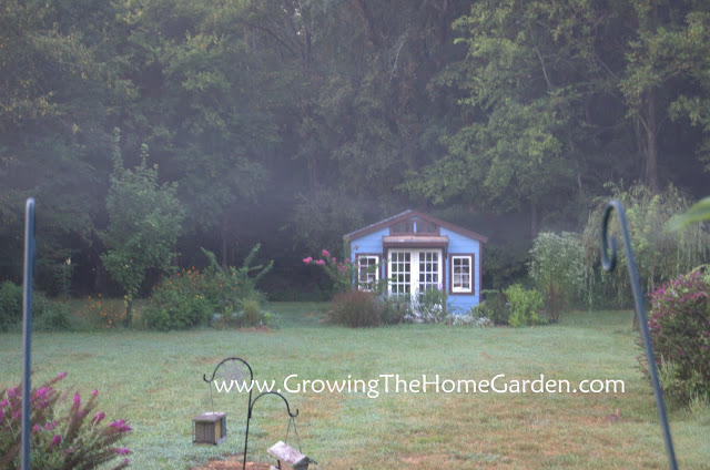 Garden Shed in the Morning (Photo)