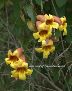 5 Neat Native Plants!