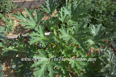 Garden Status Report: Mid July