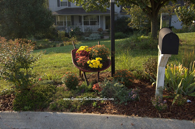 Mums and a Mailbox Garden Meet a Wheelbarrow