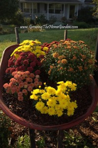 More Mums and the $50 Lowe's Giveaway Ends Today!