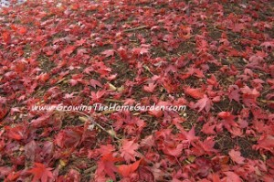 5 Reasons to Love Your Leaves