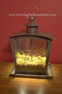 How to Make an Indoor Decorative Herb Planter Out of a Birdfeeder