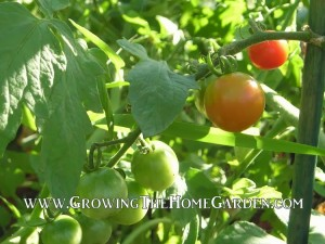 Edible Landscaping for Beginners: Elements of a Sustainable Plan