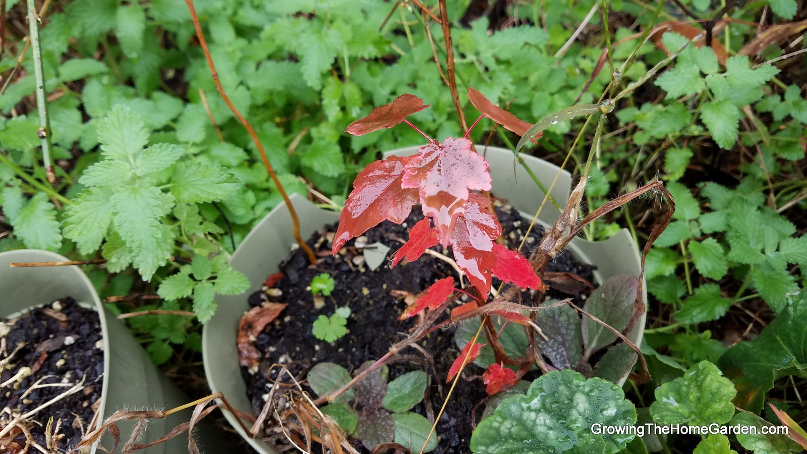 Fall Color 2017 from Growing The Home Garden - Growing The Home Garden