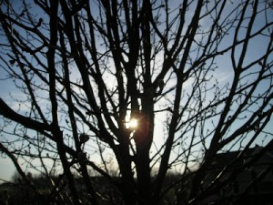 Through Winter's Branches Comes Morning's Glory