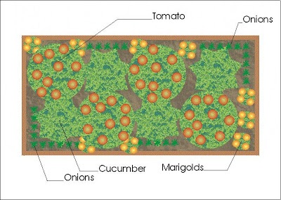 A Companion Planting Vegetable Garden Layout - Growing The ...