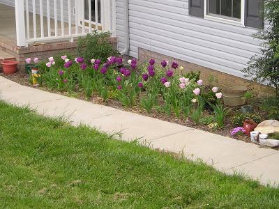 Sidewalk Garden, The Other Side