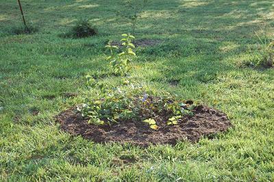 TGT: Layering Shrubs, Trees and Perennials