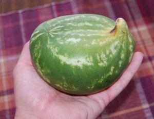 What a Watermelon!