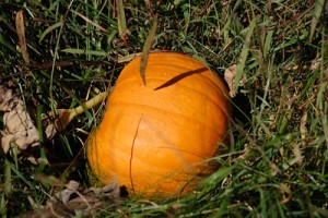 Vegetable of the Month: Pumpkins of course!