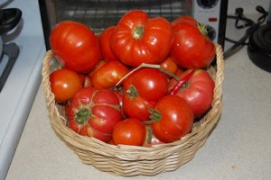 October Tomatoes