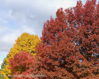 Garden Blogger Fall Color Project: From the Midwest!