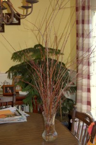 Pruning and Propagating a Japanese Dappled Willow