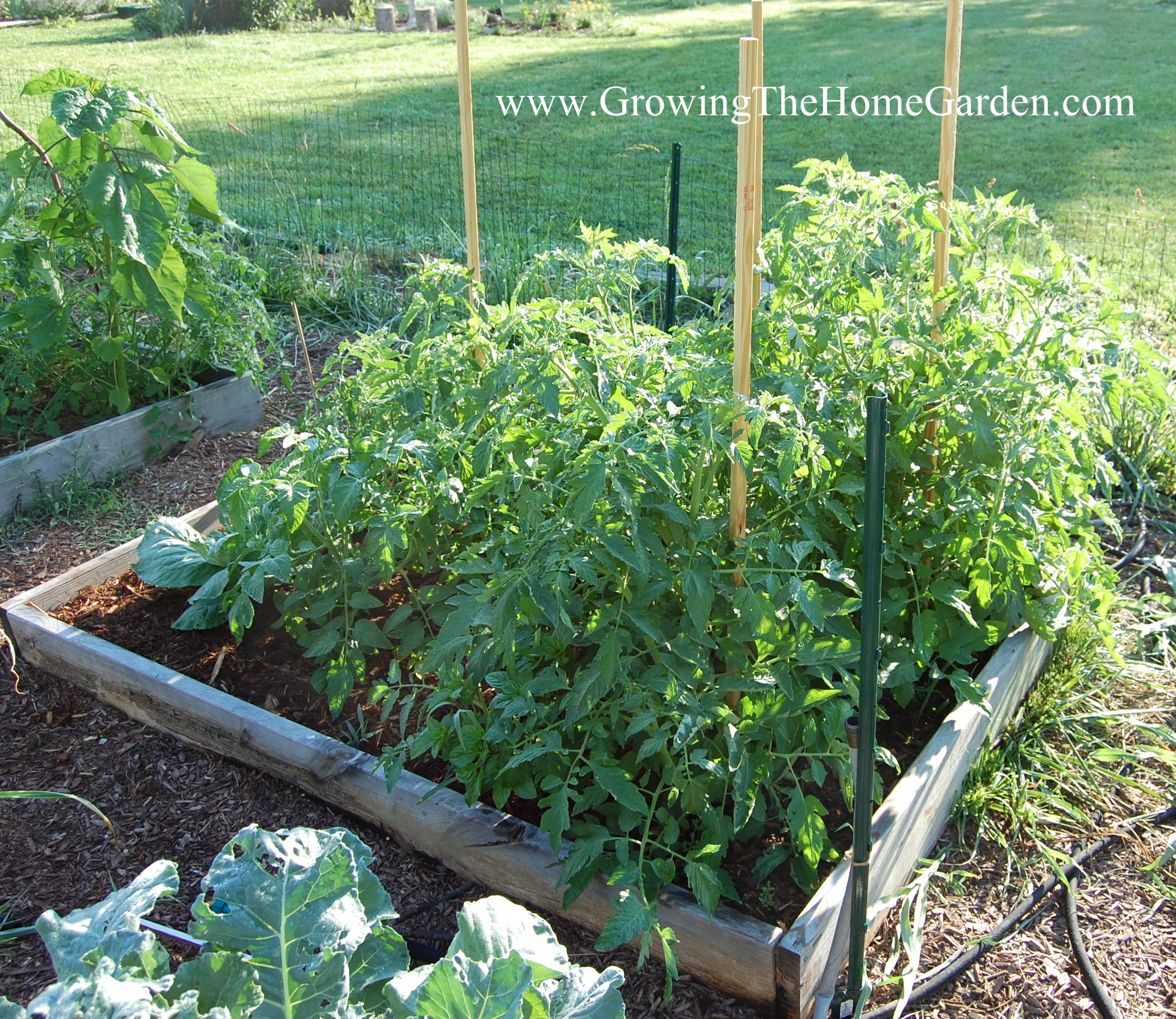11 Tips to Consider When Designing a Raised Bed Vegetable