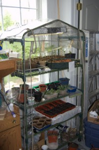 Seedling Updates From the Garage Greenhouse