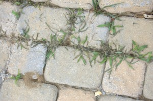 How to Kill Weeds Between Paving Stones