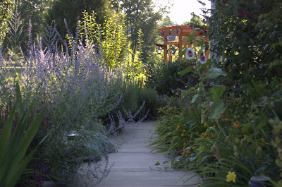 Russian Sage in the Garden