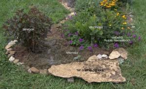 The Birdbath Garden August Expansion