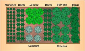 Fall Vegetable Garden Layout for a 4'x8′ Raised Bed