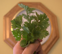 Time for Cilantro from the Garden!