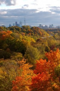 Fall Color Project: Colors of Toronto and California Wanderings