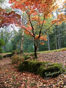 Fall Color Project: A Walk Through Washington