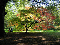 The Fall Color Project: From Westonbirt Arboretum to SE Pennsylvania