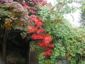 The Fall Color Project: Fall Colour in the UK!