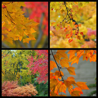 Fall Color Project: More Autumn Art