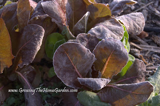 November in the Vegetable Garden