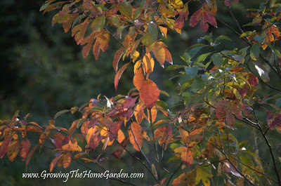 Fall Colors From My Garden